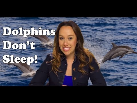 Do dolphins sleep? fun facts i bet you didn't know about dolphins