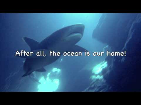 Keep the ocean clean- full song -by birdsong and the eco-wonders