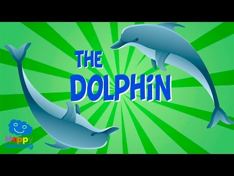 The dolphin | educational video for kids.