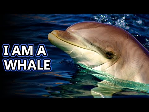 Dolphin facts: is a porpoise a dolphin?   animal fact files