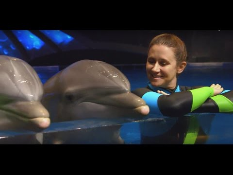 The incredible life of a dolphin trainer