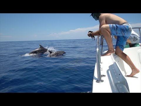 In search of dinner... dolphin fishing