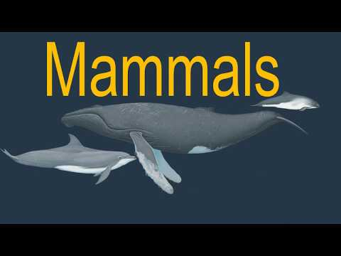 What is the difference between whales, dolphins and fish?   whale and dolphin conservation