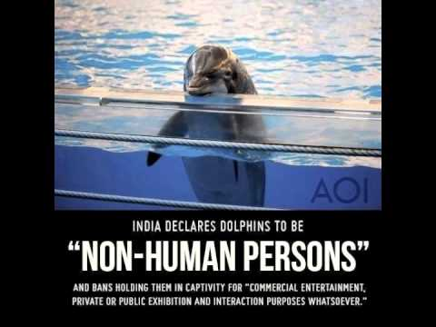 India declares dolphins non human persons, illegal to kill, hurt or own