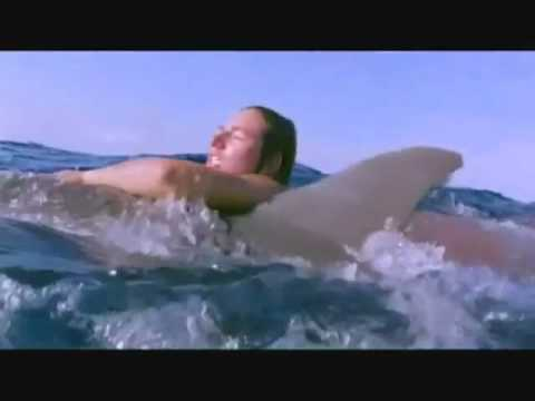 Sharks attack people dolphins defend