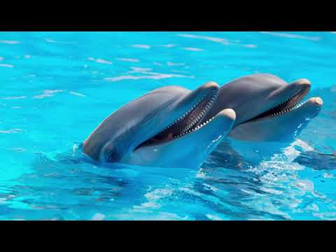 Are dolphins really happy and friendly to humans?