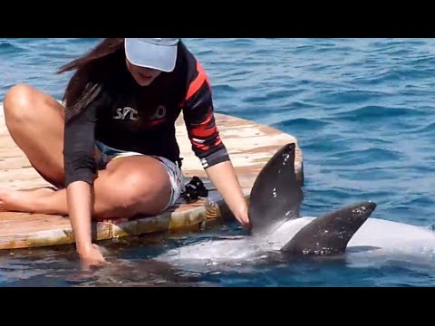 Dolphins love human, sweet!