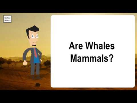 Are whales mammals