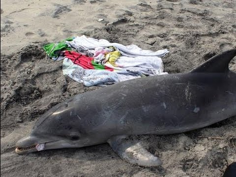 Dolphins are washing up on shore all over the east coast!