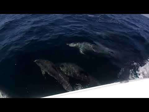 There were dolphins everywhere!!!