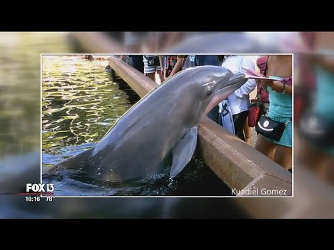 Man who recorded dolphin taking ipad still laughing