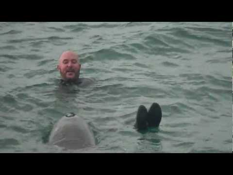 Dusty the friendly wild bottlenose dolphin- kate bush-somewhere in between