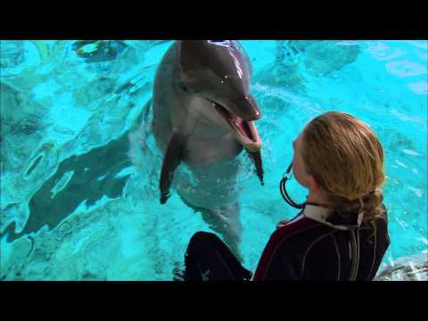 Super smart dolphin answers questions | extraordinary animals | bbc earth