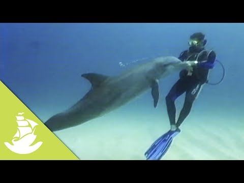 Wild dolphins and humans have a great friendship