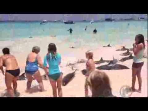 Dolphins wash up on shore