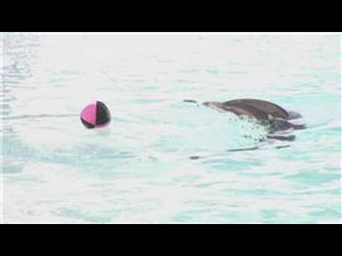 Dolphin facts : are dolphins smarter than humans?