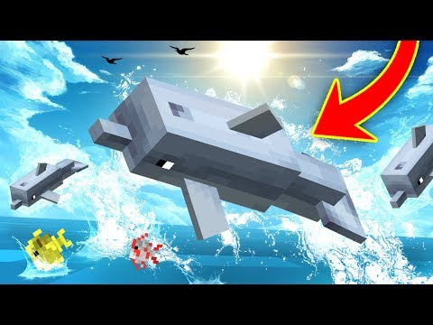 Everything you need to know about dolphins in minecraft!
