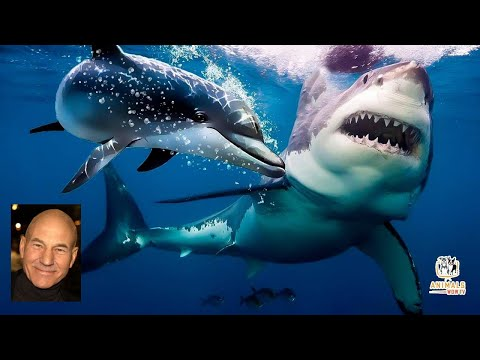 Why sharks are afraid of dolphins - narrated by impressionist of jean luc picard - patrick stewart