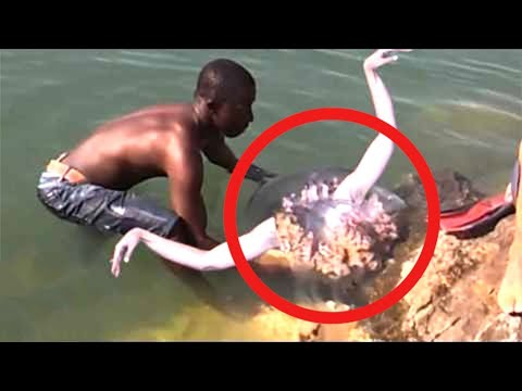 He finds real life mermaid... then this happens...