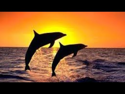 Interesting dolphin facts for kids mind blowing facts about dolphins fun facts about dolphin