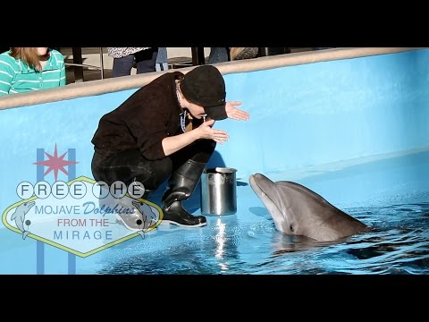 Conversations with a mirage dolphin trainer