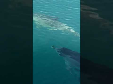 Swimming dolphins in the sea   animals   fish