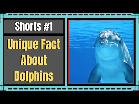 Unique fact about dolphins   why dolphins sleep with open eyes?   paras joshi   #shorts #facts