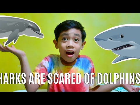 Why sharks are scared of dolphins? || #factsaboutdolphin #factsaboutshark