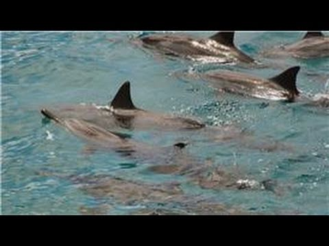All about dolphins : how do dolphins get their food?