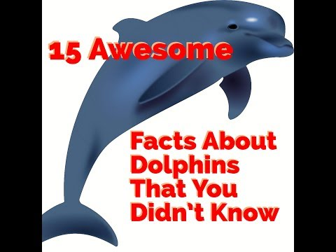 15 awesome facts about dolphins that you didn't know