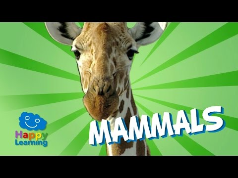 Mammals | educational video for kids