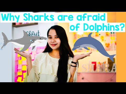 Why sharks are afraid of dolphins | animation