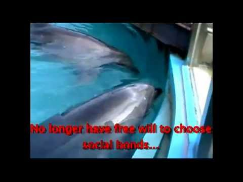 Dolphins in captivity vs. dolphins in the wild