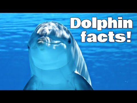 Dolphin facts for kids   classroom edition animal learning video
