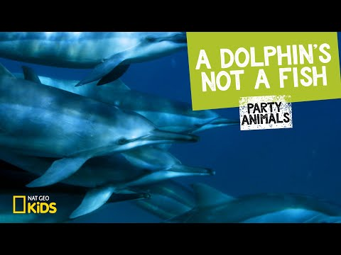 A dolphin's not a fish   party animals