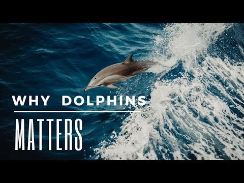 Why dolphins matters | intelligent sea mammals | facts and threats