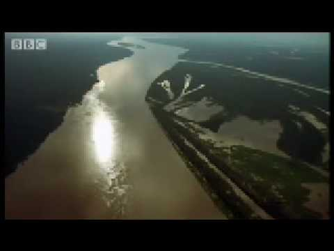 The mighty amazon & river dolphins -wild south america - bbc