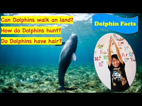 How do dolphins hunt? | fun facts about dolphins