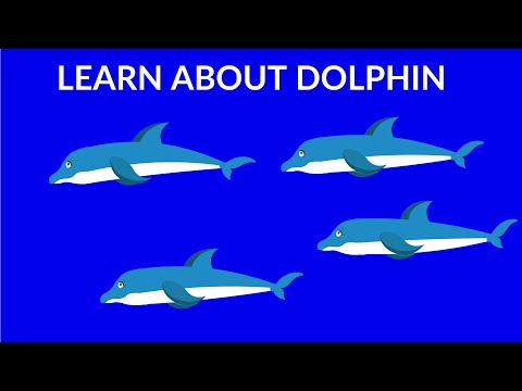 Interesting facts about dolphins    dolphins video for kids