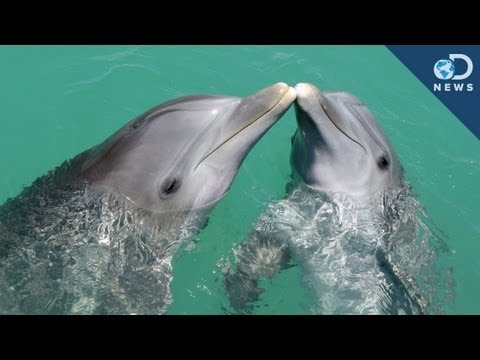 Dolphins give each other unique names